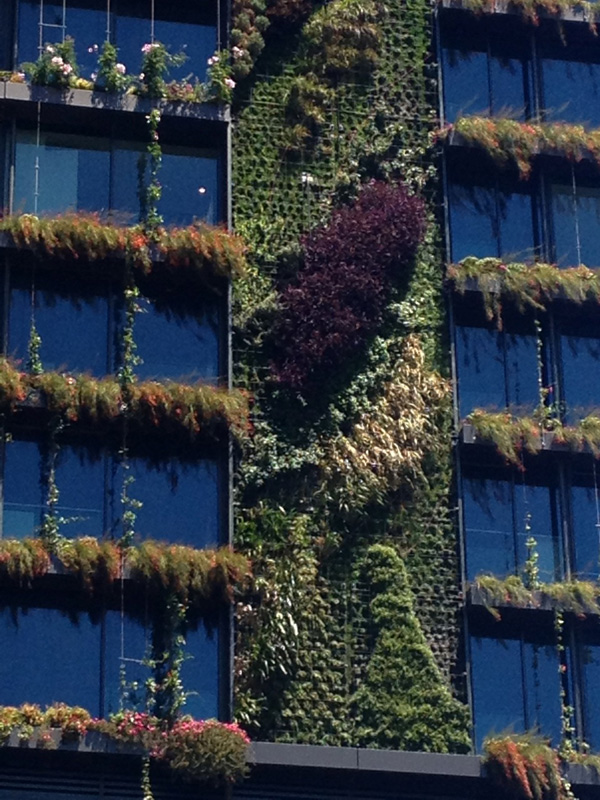 Tallest Living Wall in the World - detail - Sydney