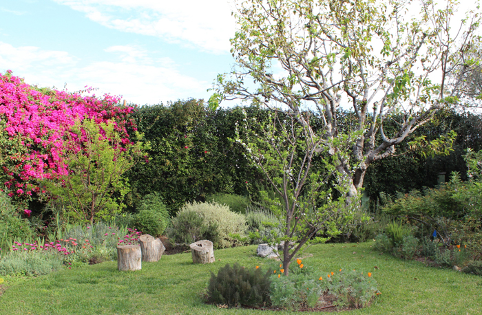 Horticultural Care Laurel Canyon Blvd